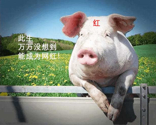 疫情之下,又一行业大变天!房地产企业集体养猪?-咚咚租